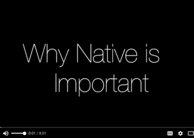 Why Native Advertising?