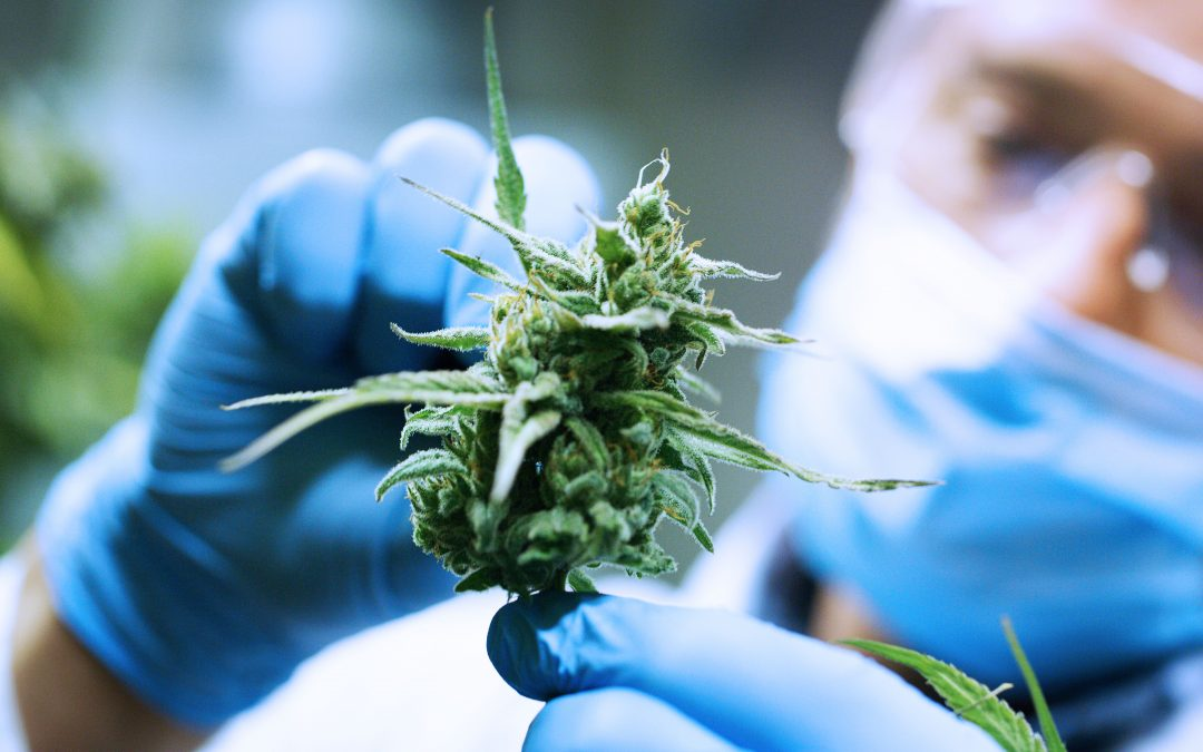 On MediaPost: It's Legal, Now How Do We Advertise Medical Marijuana?